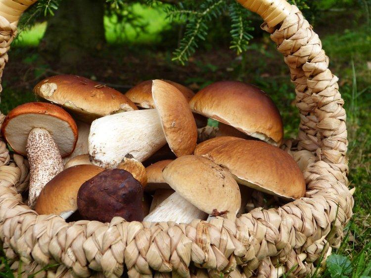 Priotráviť sa môžete aj jedlými hubami, ktoré sú nesprávne skladované. FOTO: Pixabay